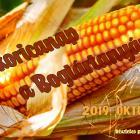 Őszi kukoricanap a Boglártanyán - Tölts el egy napot a hagyományőrzés szellemében!