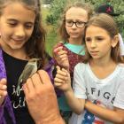 Természetismereti táborok a Boglártanya Erdei Iskolában