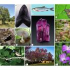 Íme a 2021-es év élőlényei és természeti képződményei