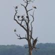 Megpihenő gólyák