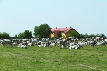 Dohányos-ház Pusztai Fogadó - Pusztai Állatpark